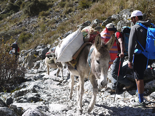Alpamayo, Peru, Montana Alpine Guides, donkey assist, porters